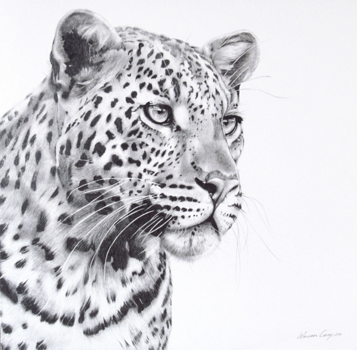 Excellent Leopard Pencil Drawing Lessons Leopard Portrait Done In Pencil. | Warren Cary Wildlife Artist In Pic