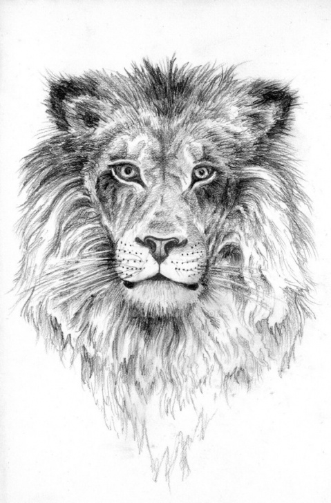 Excellent Lion Pencil Art Ideas Lion Pencil Sketch By S4-D On Deviantart Image