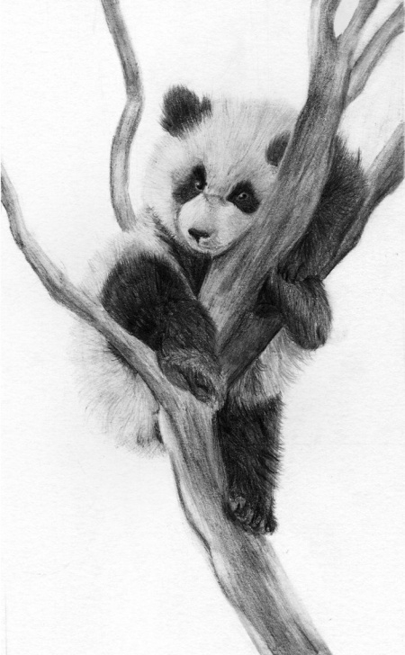 Excellent Panda Drawing Realistic Courses Panda By Rueppells-Fox On @deviantart | Panda For K | Panda Drawing Pictures