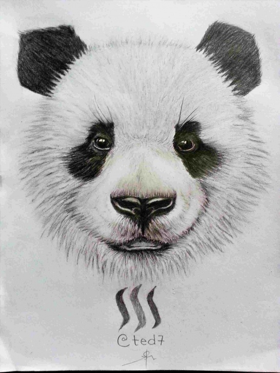 Excellent Panda Drawing Realistic Free How To Draw A Realistic Panda Images