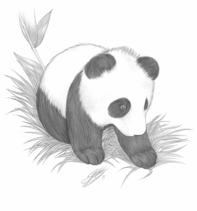 Panda Pencil Drawing