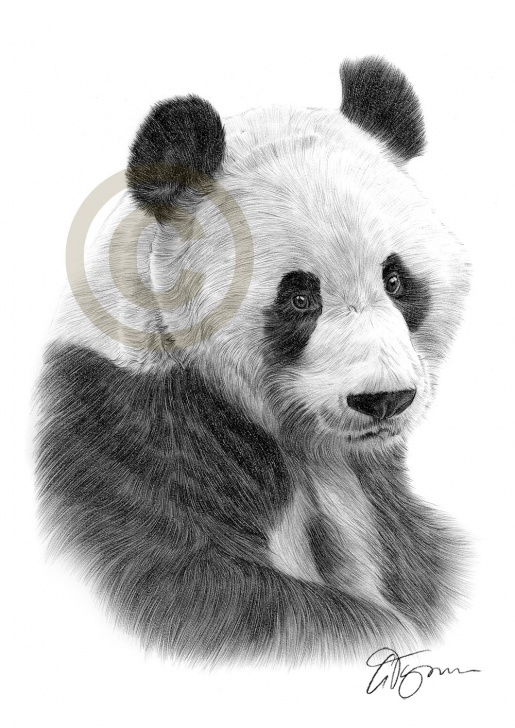 Excellent Panda Pencil Sketch Step by Step Panda Pencil Sketch At Paintingvalley | Explore Collection Of Photo