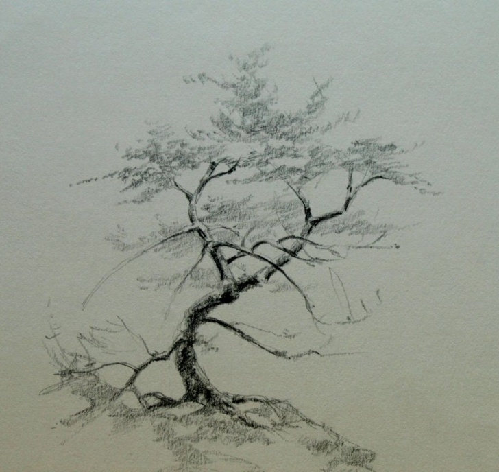 Excellent Pencil Art Tree Free Tree Pencil Sketch At Paintingvalley | Explore Collection Of Image