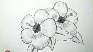 Excellent Pencil Drawings Of Flowers Easy How To Draw Hibiscus Flowers || Pencil Drawing, Shading For Beginners Pics