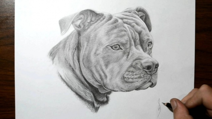 Excellent Pitbull Drawings In Pencil Simple How To Draw A Dog - Pit Bull Pictures