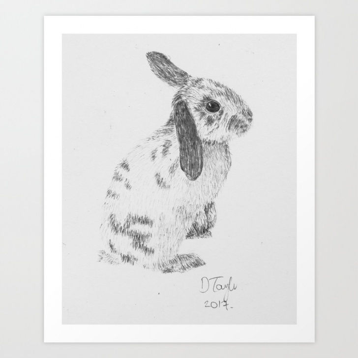 Excellent Rabbit Pencil Art for Beginners Rabbit Pencil Drawing Art Print Images