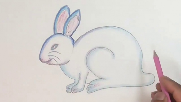 Excellent Rabbit Pencil Art Techniques How To Draw Rabbit Step By Step (Color Pencil) Photo