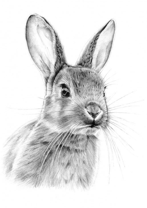 Rabbit Sketch In Pencil