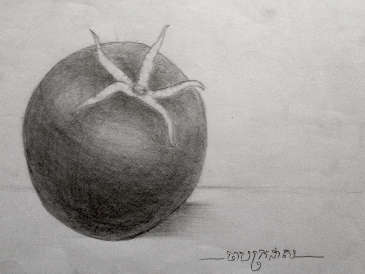 Tomato Pencil Drawing