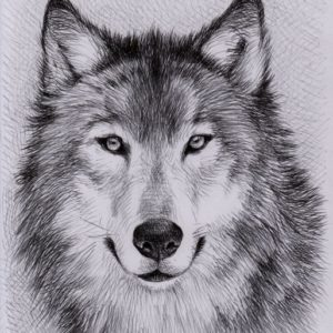 Excellent Wolf Pencil Art Techniques Unique Wolf Drawings - Google Search | Art | Wolf Painting, Wolf Image