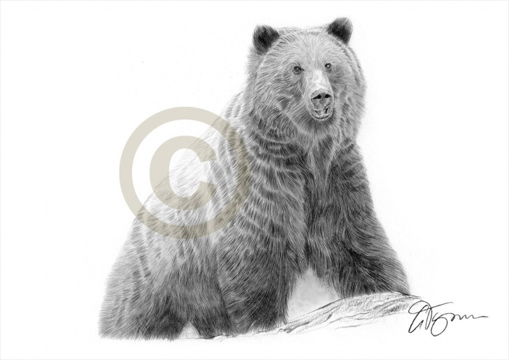Fantastic Bear Pencil Drawing Free Grizzly Bear Pencil Sketch And Brown Bear Artwork Pencil Drawing Image