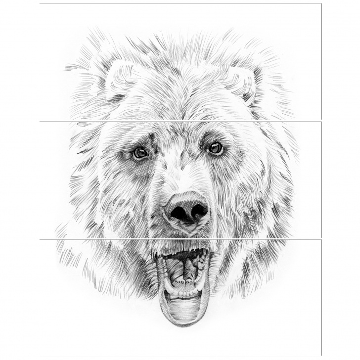 Fantastic Bear Pencil Drawing Step by Step 'pencil Bear Sketch In Black And White' Drawing Print Multi-Piece Image On  Canvas Pic