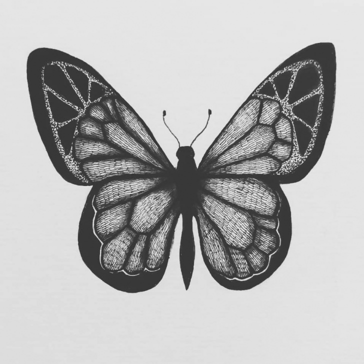 Fantastic Butterfly Pencil Sketch Easy Butterfly Drawing, Pencil, Sketch, Colorful, Realistic Art Images Picture