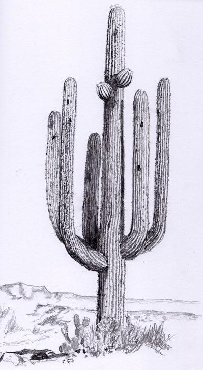 Fantastic Cactus Pencil Drawing Ideas Cactus Pencil Drawing At Paintingvalley | Explore Collection Of Image