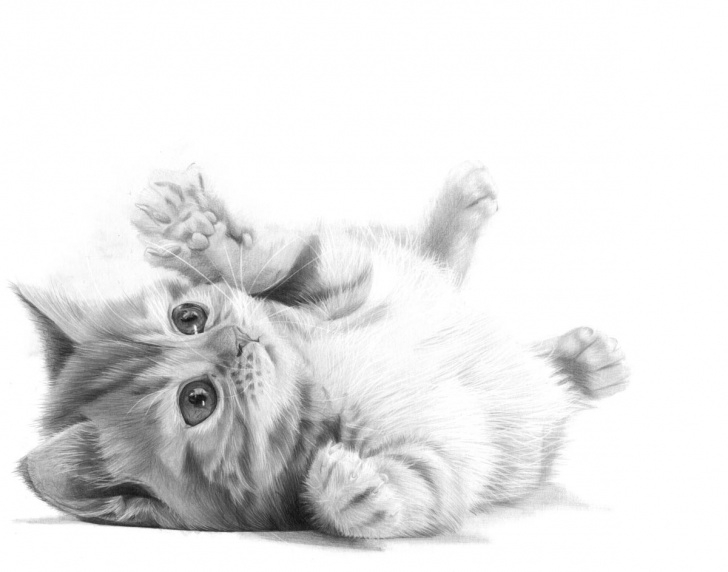 Fantastic Cat Pencil Drawing Easy Puddy Cat Pencil Drawing, By Artist Sophie Lawson Picture