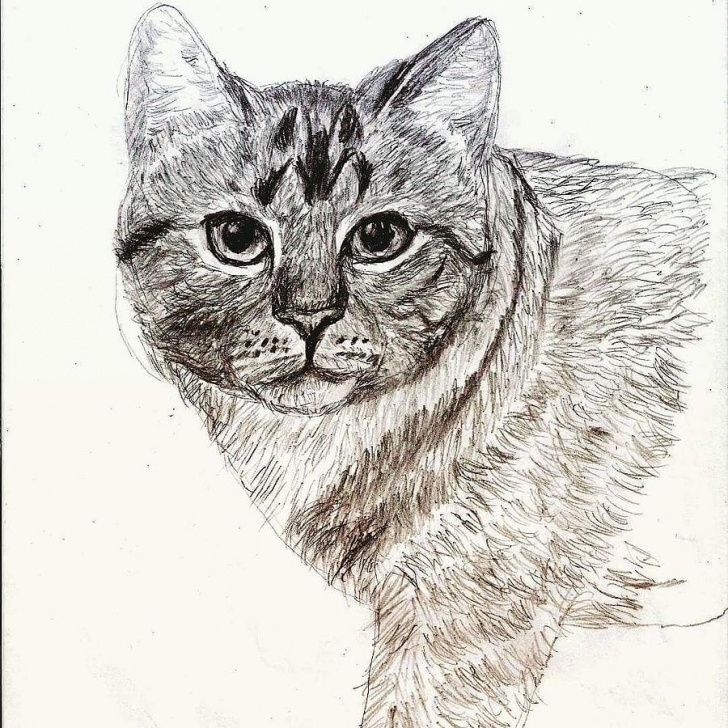 Fantastic Cat Pencil Sketch Ideas Cat Portrait In Pencil By Rhashid Dukes Pics