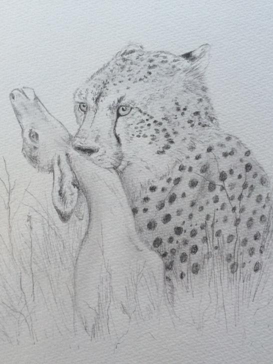 Fantastic Cheetah Pencil Drawing for Beginners Pencil Drawing: Cheetah And Impala | Collidescopes Pics