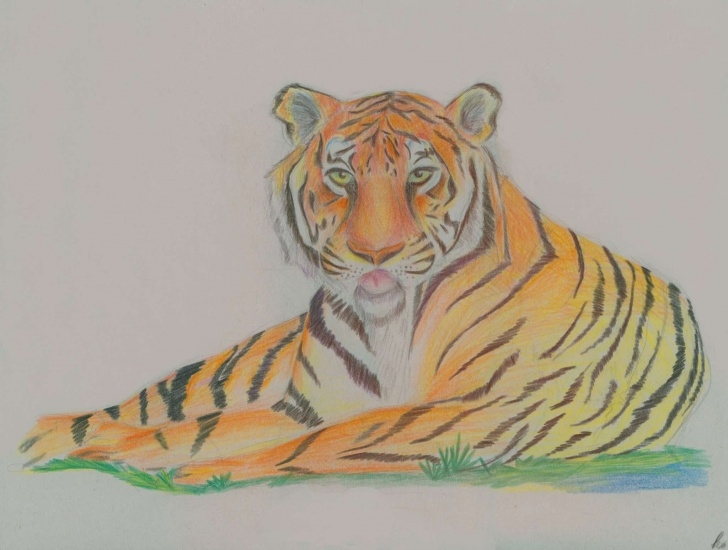 Fantastic Colored Pencil Animals Step by Step Jghs 2011-2012 Colored Pencil Animals Image
