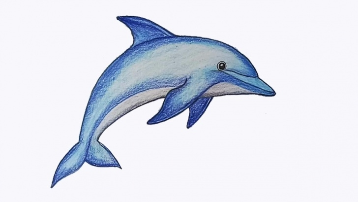 Fantastic Dolphin Pencil Drawing Tutorials How To Draw Dolphin Step By Step Picture