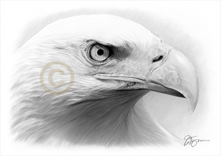 Fantastic Eagle Pencil Art Easy Eagle Artwork - Bald Eagle Pencil Drawing Print - Wildlife Art - Signed By  Artist Gary Tymon - 50 Prints Only - 2 Sizes - Pencil Portrait Photo