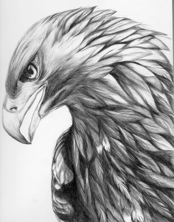 Fantastic Eagle Pencil Drawing Ideas Aigle Dessiné Au Stylo Bille | Tattoo In 2019 | Eagle Drawing Images