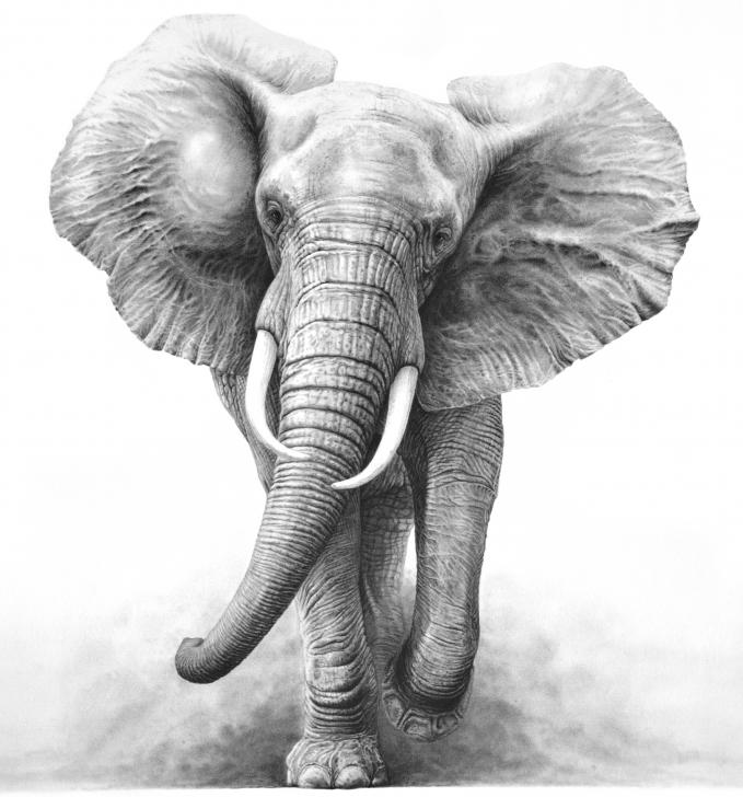 Fantastic Elephant Pencil Drawing Techniques for Beginners Elephant Pencil Drawing Tattoo Design | Pencil Art | Elephant Tattoo Pics