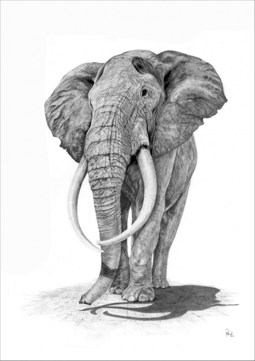 Fantastic Elephant Pencil Sketch Step by Step Elephant Pencil Drawing Print Picture