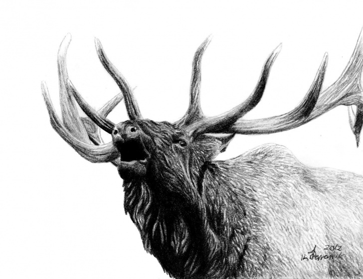 Fantastic Elk Pencil Drawings Simple Pin By Dottie Cordwell On I Am Horny | Elk Tattoo, Elk Drawing Pics