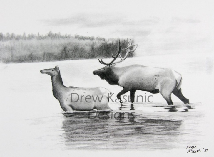 Fantastic Elk Pencil Drawings Techniques Still Waters Original Pencil Drawing By Drew Kasunic Pic
