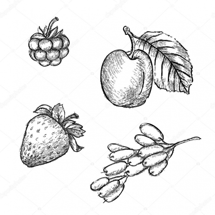 Fantastic Fruits Pencil Drawing Ideas Pencil Sketch Of Fruits — Stock Vector © Vitasunny #64611207 Pic