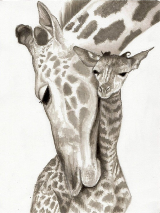 Fantastic Giraffe Pencil Drawing Free Baby Giraffe Pencil Drawing 1000+ Images About Drawing On Pinterest Pic