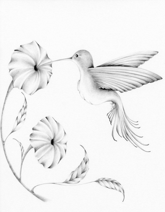 Fantastic Hummingbird Drawings In Pencil Tutorials Hummingbird Drawing Giclee Fine Art Print Of My Original Pencil Drawing  Artwork Winter Woodland Hummingbird Pencil Drawing Bird Art Print Photos