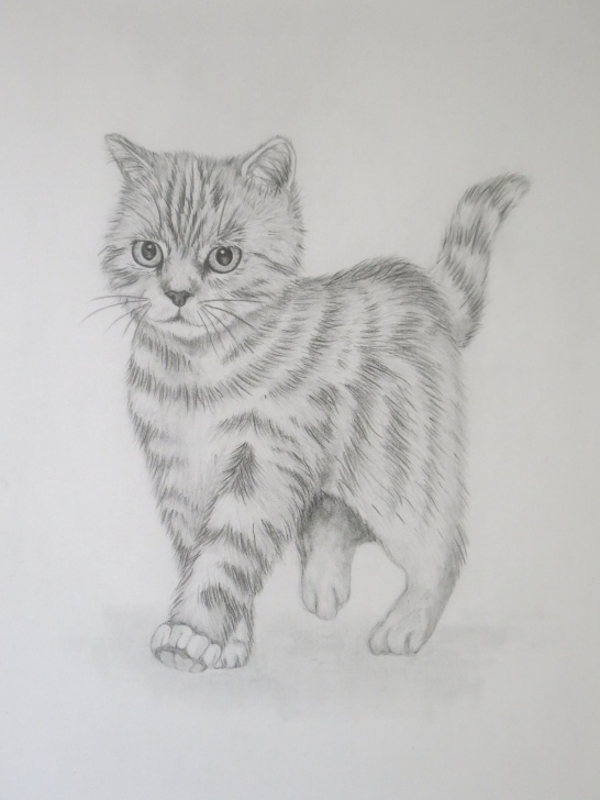 Fantastic Kitten Pencil Drawing Step by Step Adorable Kitten Pencil Drawing. Prints Now Available On My Etsy Shop Images