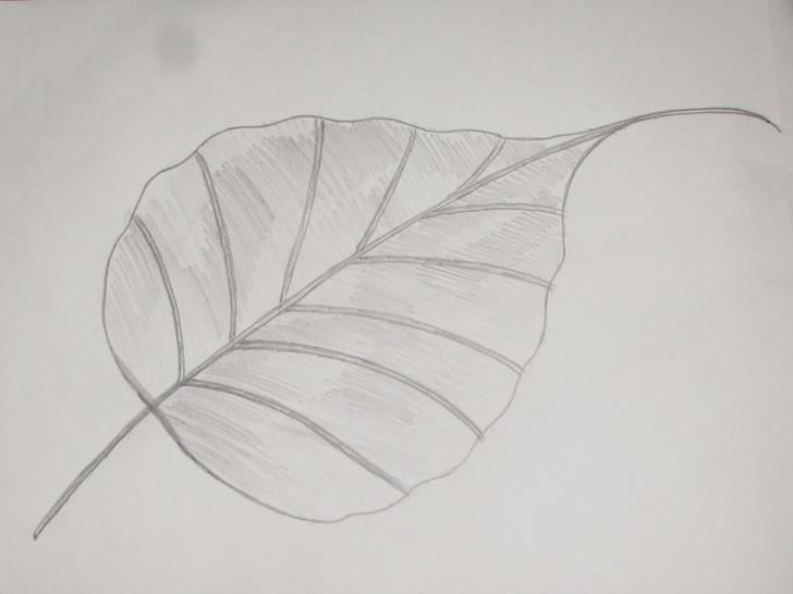 Fantastic Leaf Pencil Sketch Free How To Draw And Sketch Ficus Religiosa (Peepal) Leaf #6 - Richa Art Club Images