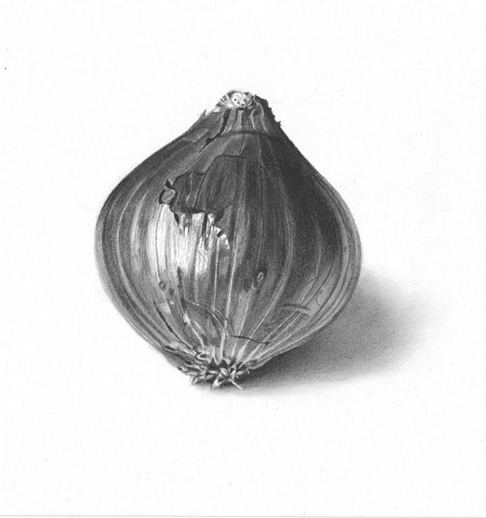 Fantastic Onion Pencil Drawing Easy Pencil Drawing Of An Onion. Graphite On Paper | My Pencil Drawings Images
