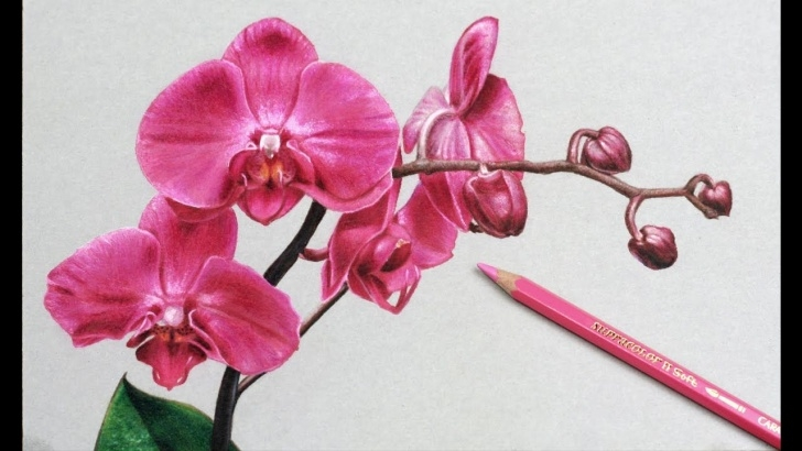 Fantastic Orchid Pencil Drawing Tutorial Orchid Flower Drawing In Pencil And Orchid Flower Drawing In Pencil Image