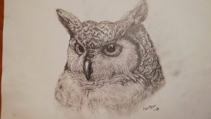Fantastic Owl Pencil Drawing Free How To Draw Realistic Owl/pencil Drawing Picture