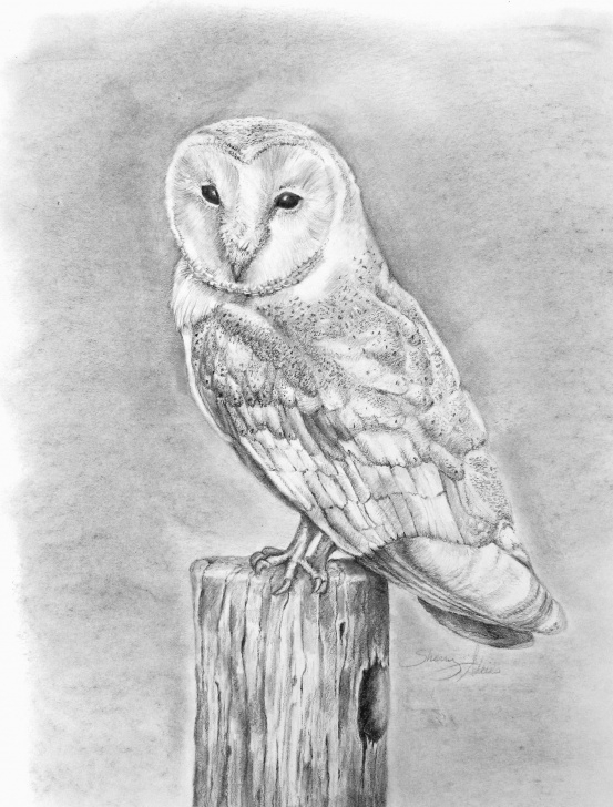 Fantastic Owl Pencil Drawing Techniques Barn Owl Pencil Drawing Print | Art By Sherry Adkins | Pencil Pics