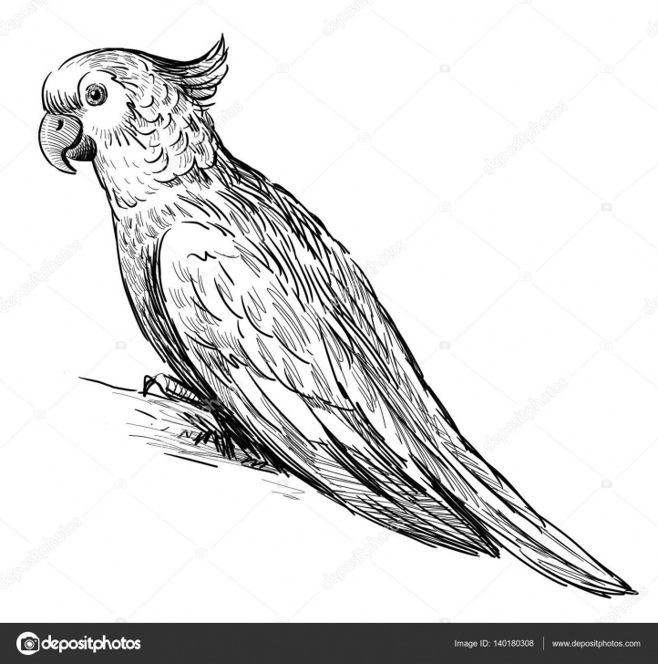 Fantastic Parrot Pencil Sketch Step by Step Sketch Of Parrot   Sketch Of Parrot — Stock Photo © Mubaister@gmail Pics