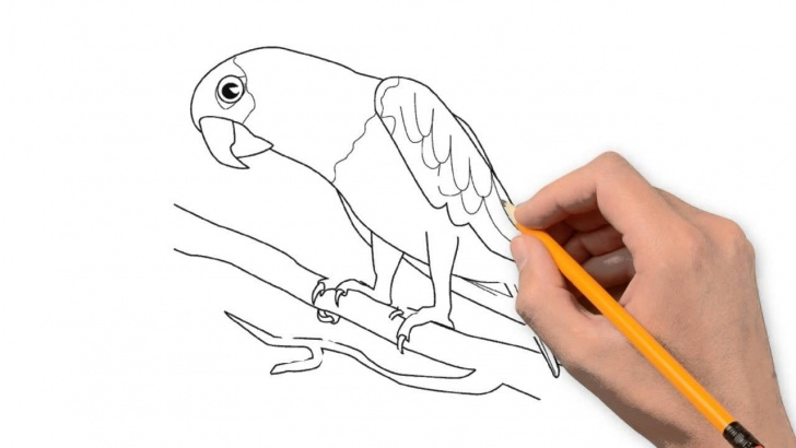 Fantastic Parrot Pencil Sketch Techniques for Beginners Parrot Animals Pencil To Draw Step By Step Picture