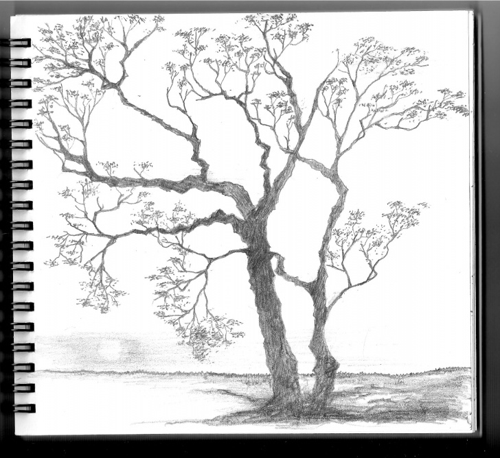 Fantastic Pencil Drawing Of Spring Season Techniques for Beginners Spring Season Drawing At Paintingvalley | Explore Collection Of Pics
