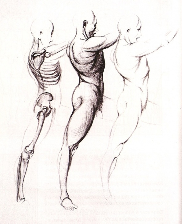 Fantastic Pencil Sketch Of Human Body Parts Step by Step Learning To Draw: Human Body Pics