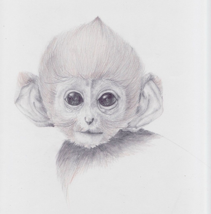 Pencil Sketch Of Monkey