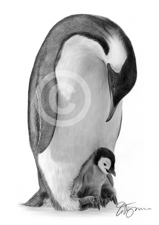 Fantastic Penguin Drawings In Pencil Step by Step Penguin C Pencil Sketch And Image Result For Emperor Penguins Photos