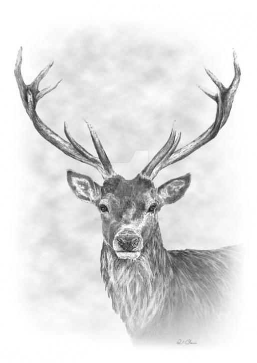 Fantastic Reindeer Pencil Drawing Tutorials Stag Pencil Drawing By Pencilspenspixels | ~Art~ | Pencil Drawings Image