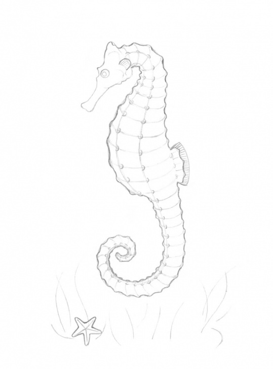 Fantastic Seahorse Pencil Drawing Simple How To Draw A Seahorse With Black And Grey Ink Liners Images