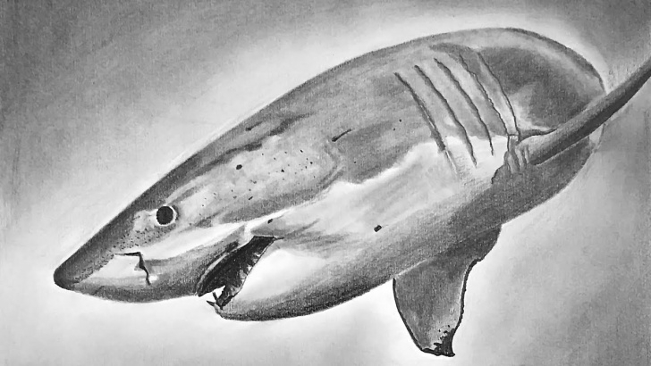 Shark Pencil Drawing