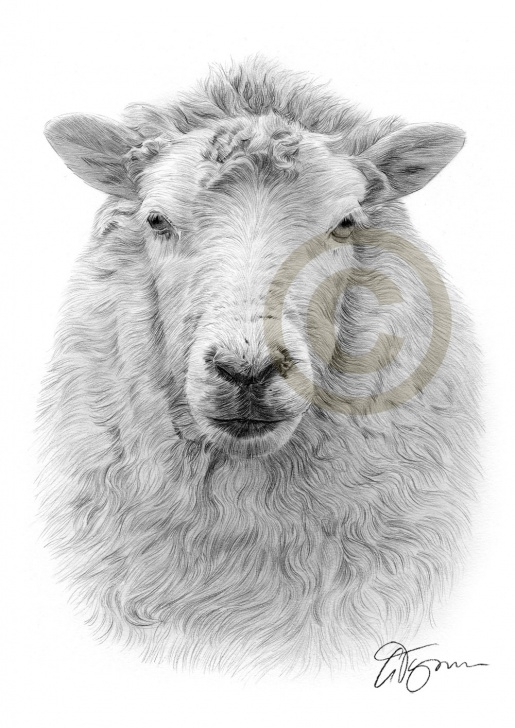 Fantastic Sheep Pencil Drawing Tutorials Pencil Drawing Of A Sheep By Artist Gary Tymon Pic