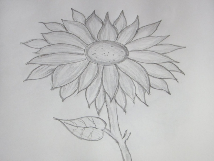 Fantastic Sunflower Pencil Drawing Free Sunflower Drawing In Pencil And Drawings Of Sunflowers Drawings Of Photos