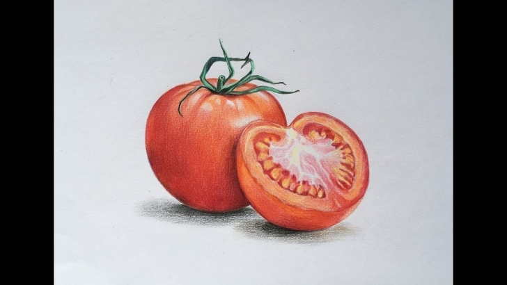 Fantastic Tomato Pencil Drawing for Beginners Tomato Drawing At Paintingvalley | Explore Collection Of Tomato Pics
